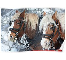Frosted Horses Poster