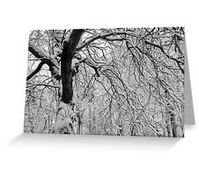 Frozen Forest Greeting Card