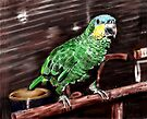 Blue-Fronted Amazon Parrot by arline wagner
