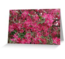 Pink flowers of apple Greeting Card