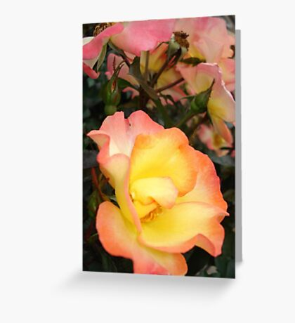 Rose, yellow and pink Greeting Card