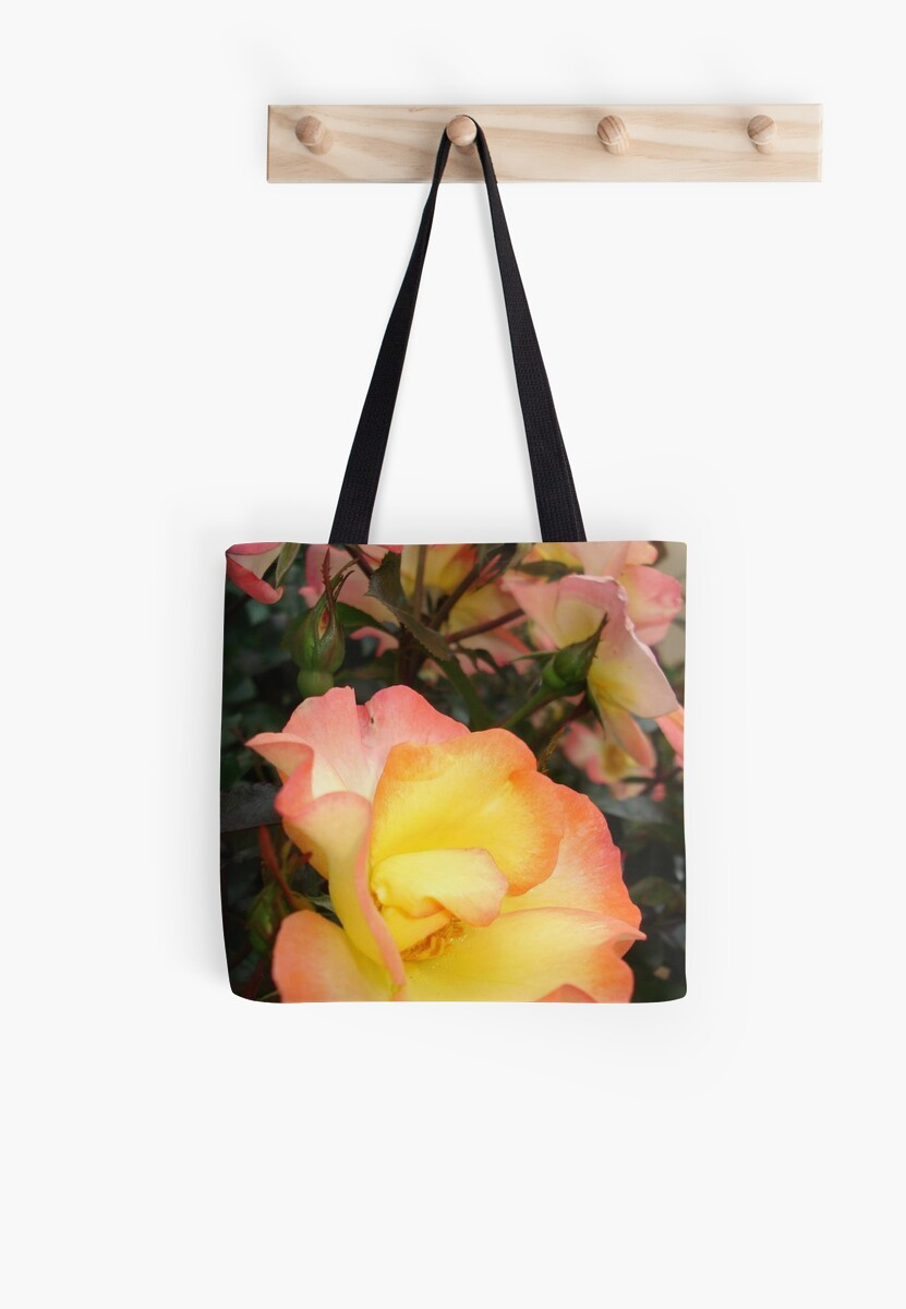 Rose, yellow and pink by May Lattanzio