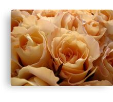 Apricot roses Canvas Print