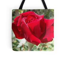 Red rose of summer Tote Bag