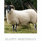 Sheep Birthday Card Northumberland Ewe by Moonlake