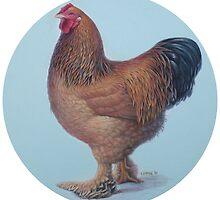 Brahma Rooster portrait by Hans  Droog