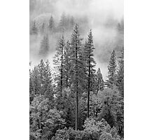 Tahoe National Forrest, Lake Tahoe CA Photographic Print