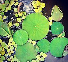 garden pond by ericalipper