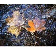 Autumn Maple Leaf on rocks with water Photographic Print