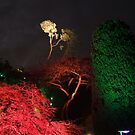 Night in the Sunken Garden(6) by George Cousins
