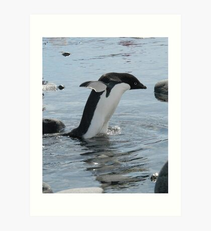 Adelie penguin taking a stroll Art Print