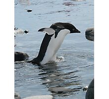 Adelie penguin taking a stroll Photographic Print