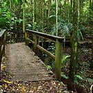 A bridge to the past by Liza Yorkston