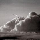 Soar by Angela King-Jones