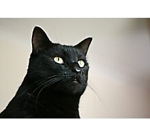 Panther Eyes Photographic Print