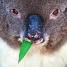 Chewing Gum by Stuart Robertson Reynolds