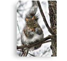"""Hey! Is That A Snowflake On Your Nose?"" Canvas Print"