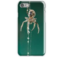 Spider building its web in the rain iPhone Case/Skin