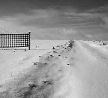 Winter fields by Lena Weiss