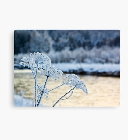 Winters Beauty Canvas Print