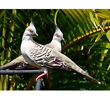 Pigeon Pair Photographic Print