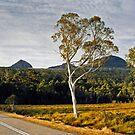 Roadtrip Tasmania by rjpmcmahon