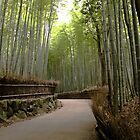 Bamboo forest, Arashiyama, Kyoto by Bill  Russo