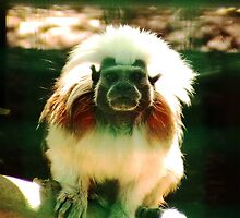 more Monkeys by chloefish