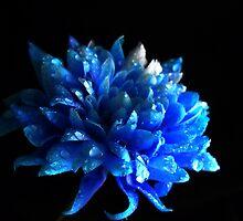 Sapphire. by Vitta