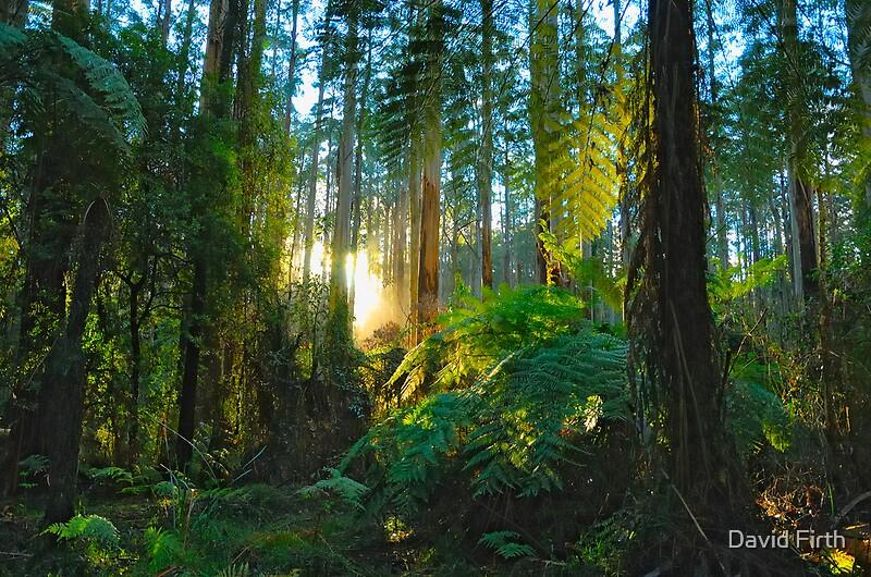 Sherbrooke Australia  City new picture : Dream Forest Sherbrooke, Australia