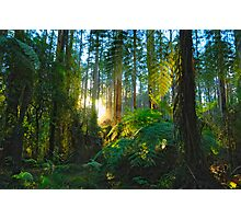 Dream Forest - Sherbrooke, Australia Photographic Print