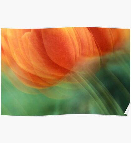 Tulips bend in the wind Poster