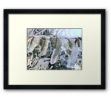 Catkins in winter. Framed Print