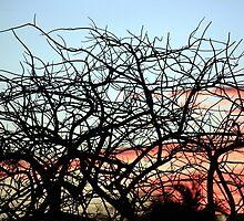 First Sunset of 2010 by Juana Maria Garcia Domenech