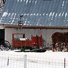 sleigh ride by Lynne Prestebak
