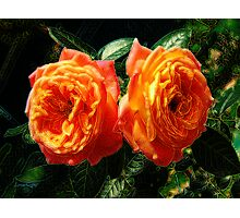 Fire of the Roses Photographic Print