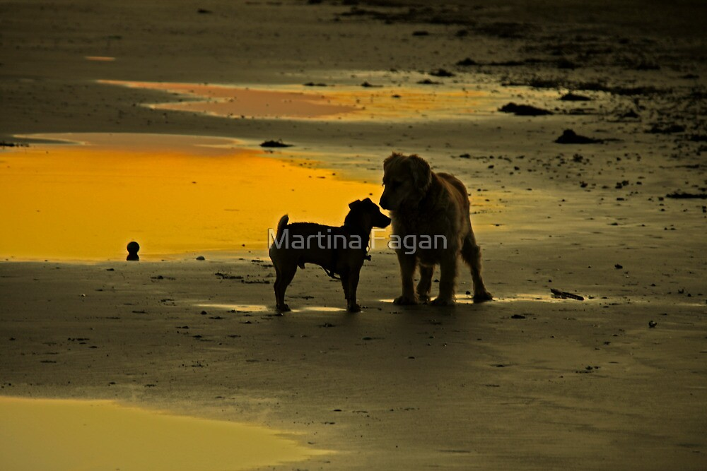The Day Joey met Charlie by Martina Fagan