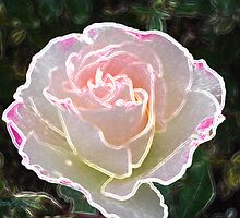 Pearl of a Rose by LoneAngel