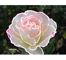 Pearl of a Rose Photographic Print