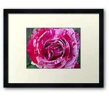 Magical Rose Framed Print