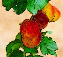 Apricots 1 by Anne Smyth