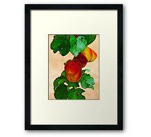 Apricots 1 Framed Print