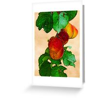 Apricots 1 Greeting Card