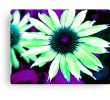 The Psychedelic Echinacea Canvas Print