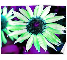 The Psychedelic Echinacea Poster