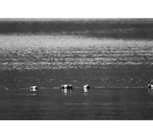 Lake Buoys in Black & White Photographic Print