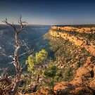 Mesa Verde - View into Soda Canyon by Ted Lansing