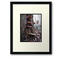 Struggle for Survival Framed Print