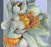 Gum Nuts by Carol McLean-Carr