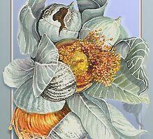 Gum Nuts 2 by Carol McLean-Carr